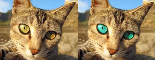 Original & Image with colour change